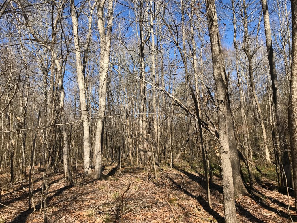 Peaceful Creek Tract -Leased - Paden Land and Timber